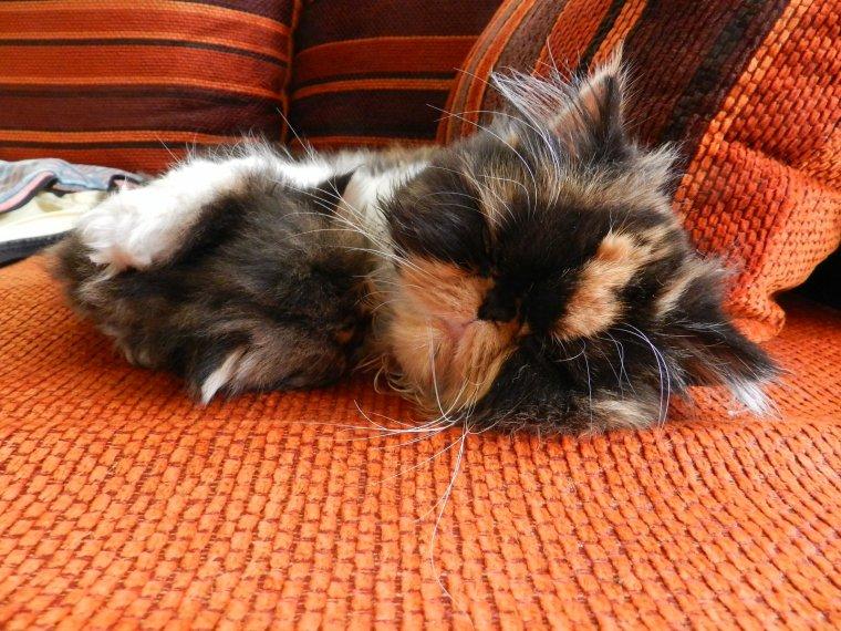 Gatina et Harmonie en pleine sieste