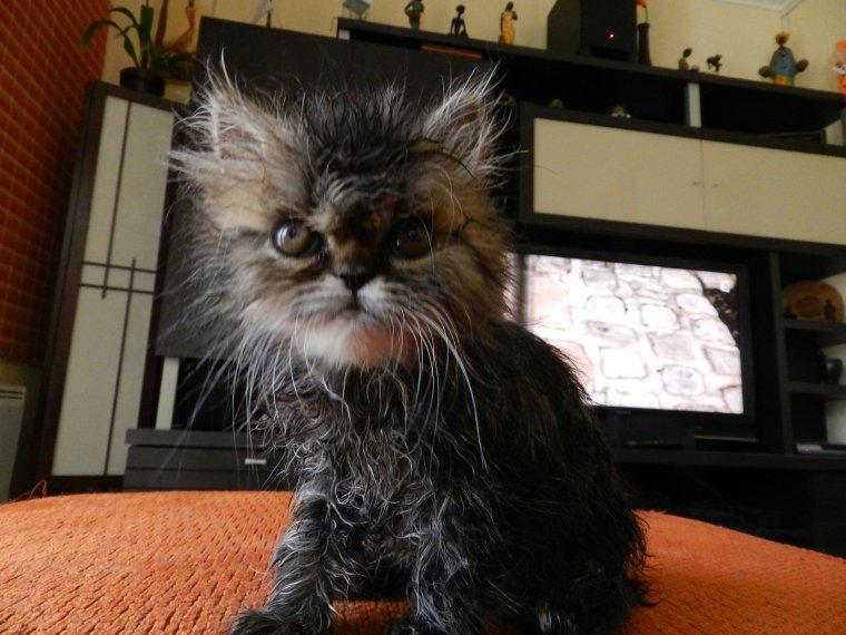 Mon premier bain, je n'aime pas ça