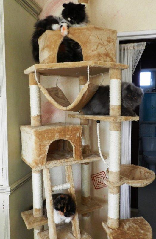 On test le nouvel arbre a chat