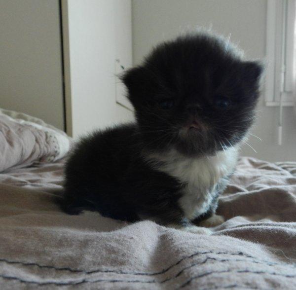 Et le dernier né mon petit mec Jimbo