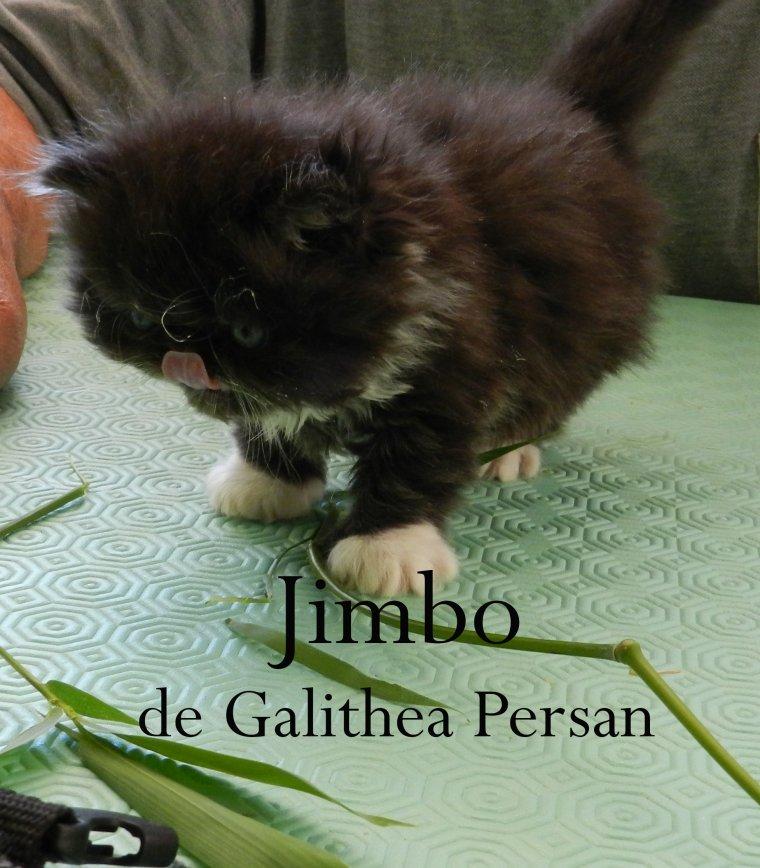 Jimbo le petit mec si tendre