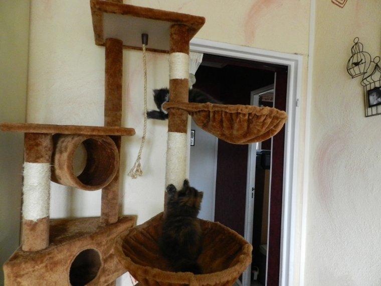 Joudy et Jimbo decouvre l'arbre a chat