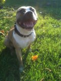 Photo de staffordshireterrier76