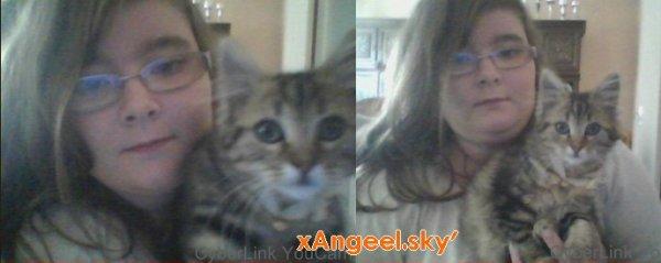 Le blog de mon chat :)