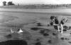 Un Ciel de Coton , Des Dauphins Flotant a L'Horizon .