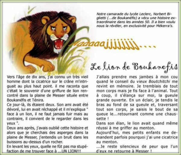 Le Lion de BOUKANEFIS