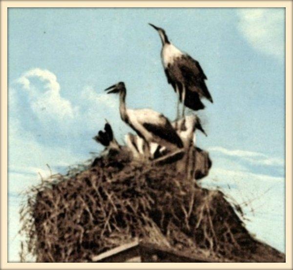 LAMTAR : Carte postale ancienne