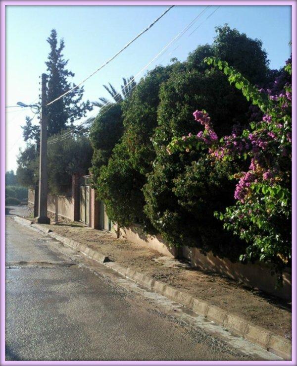 LAMTAR : Photos récentes envoyées par Mohamed MALAK