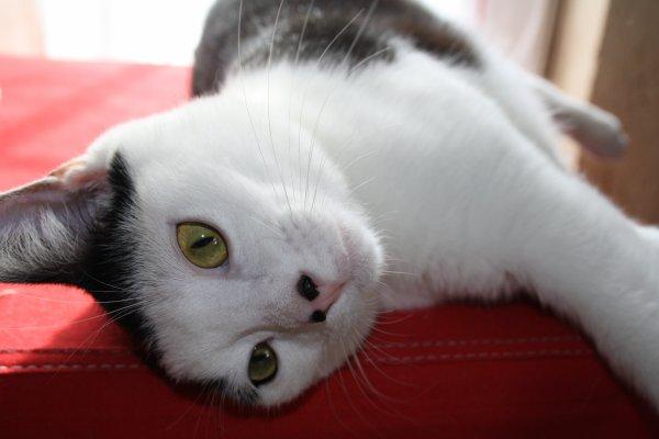 Notre petit chat d'amour...