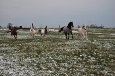 1 décembre 2010 ; la neige