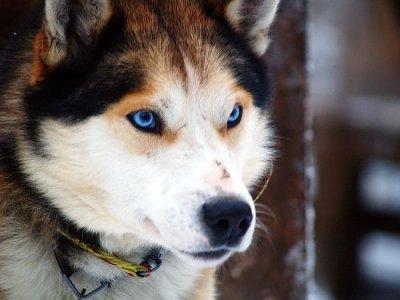 Top Race de chien moyenne taille - Oowa HO31