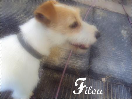Filou, le chien de Jade♥