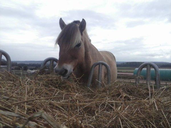 Kiwi, ou le poney qui vend du rêve. ♥