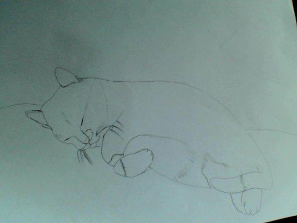 chat raté