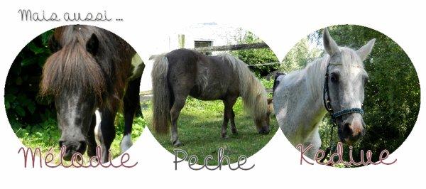 Les poneys que je travaille.