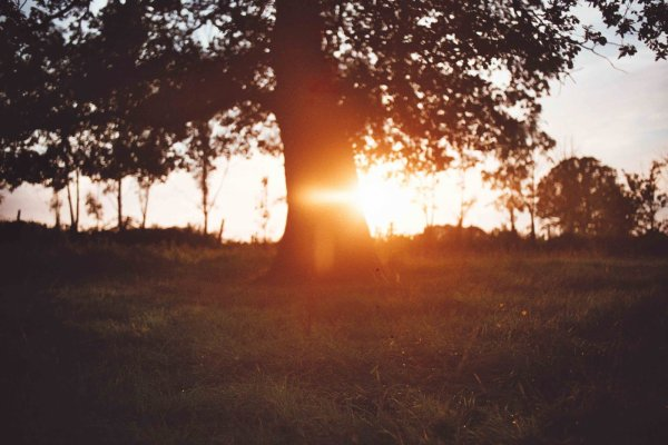 Lumière d'août - William Faulkner