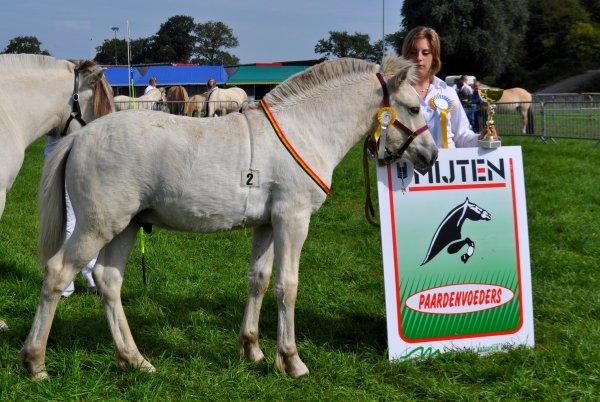 Nygar Prins de la Vallée  au concours d'élevage de Battice- Herve