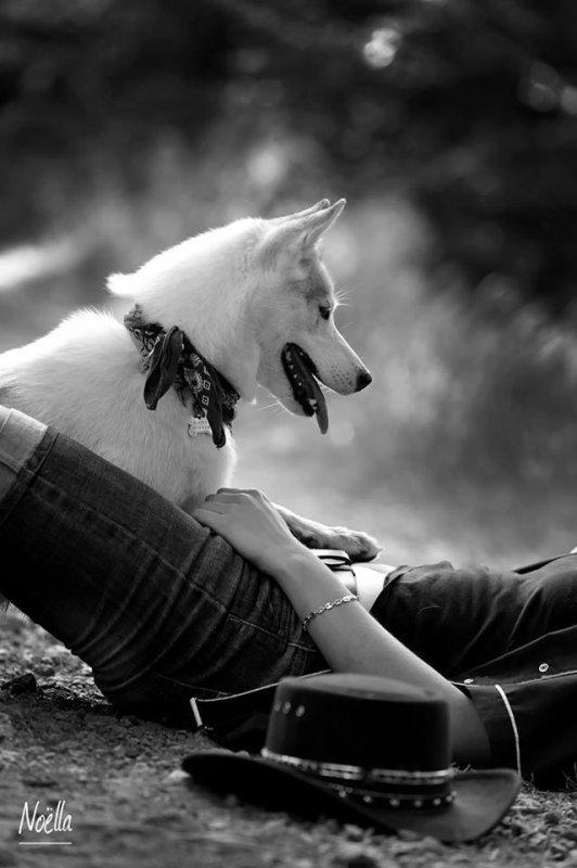 """''Si la vue des animaux nous charme tant, c'est surtout parce que nous goûtons une satisfaction à voir devant nous notre propre être si simplifié.""""  Arthur Schopenhauer"""