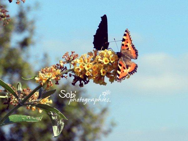 Certains papillons ne vivent qu'une journée et en général, il s'agit pour eux du plus beau jour de leur vie.