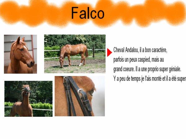 Le plus beau c'est Falco