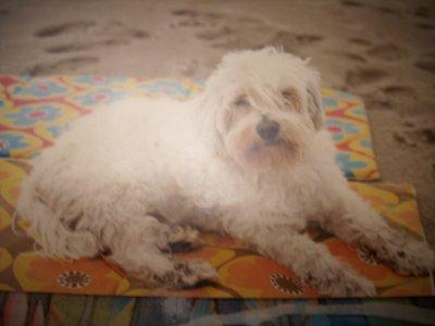 Voyou  . mon ange  gardien .. mon premier chien ; Mon grand amour