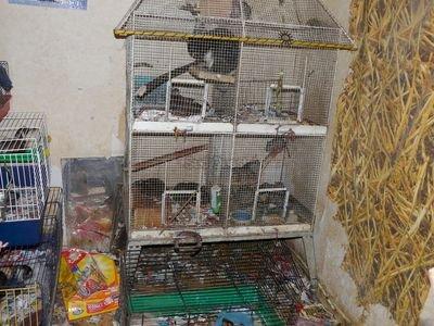 180 animaux abandonnés dans un petit appartement à Rochefort !!!!!