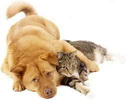 Un chat, un chien...