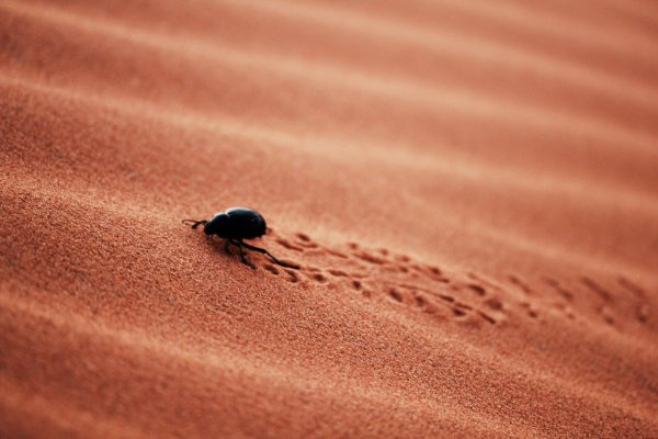 Marocco 2011 . Le Monde est une carte postale .