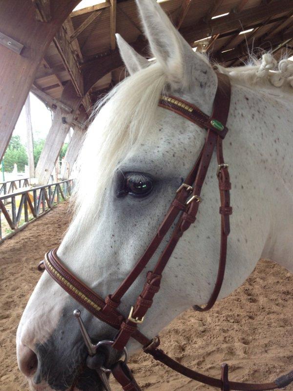 Adieu poney