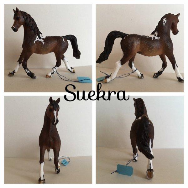 Présentation custom 1 : Suekra
