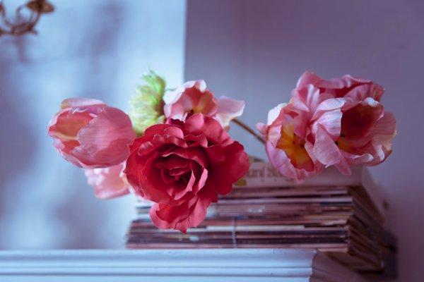 """""""La richesse de la rose, c'est sa fragilité."""""""