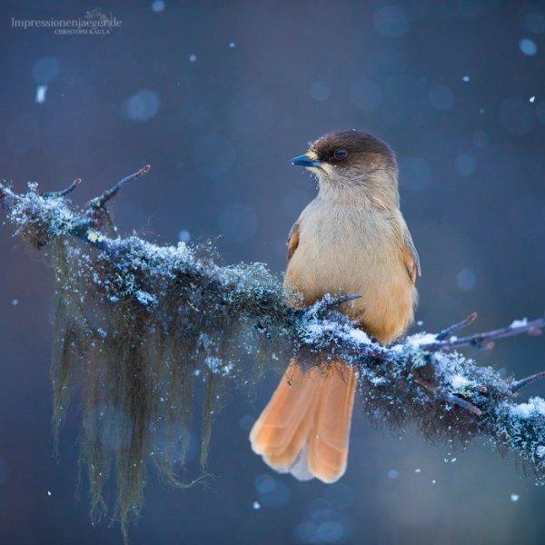 """""""Le ver est pour l'oiseau matinal."""""""