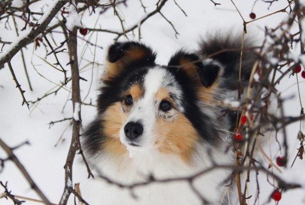 L'amitié du chien est sans conteste plus vive et plus constante que celle de l'homme.
