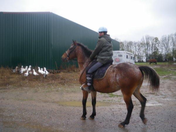 tanguy le nouveau cheval de ma fille