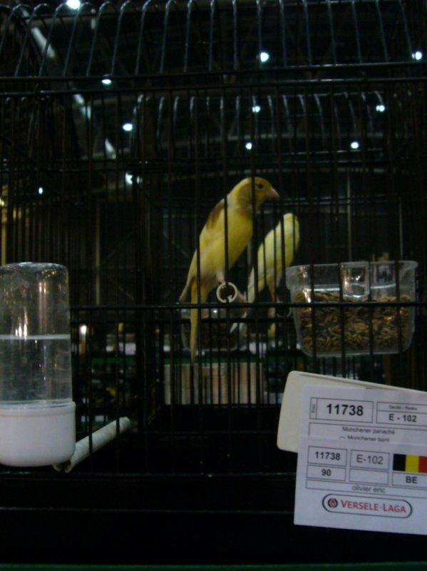 Mes oiseaux au mondial