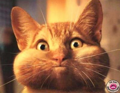 Image De Chat Rigolo chat rigolo ! - salut à tous vous etes bien sur le blog à
