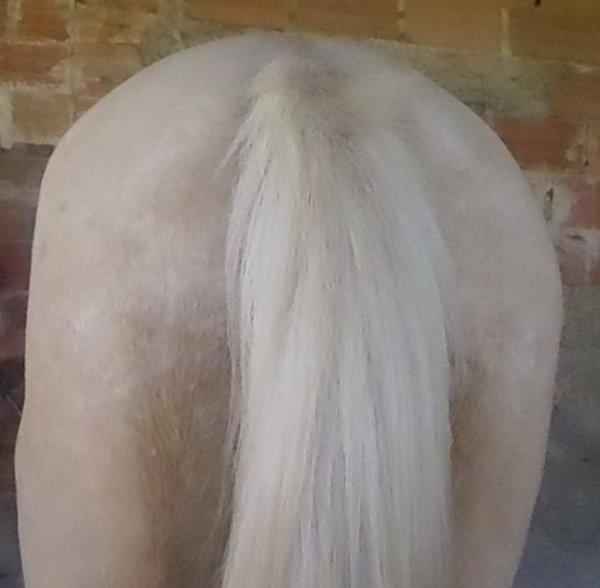 Le cheval est pour l'homme, comme les ailes pour l'oiseau