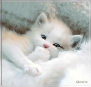 un chat mimi