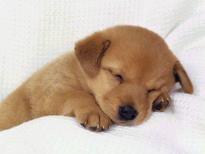 voici un chien trop beau