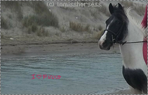 La vache à la plage