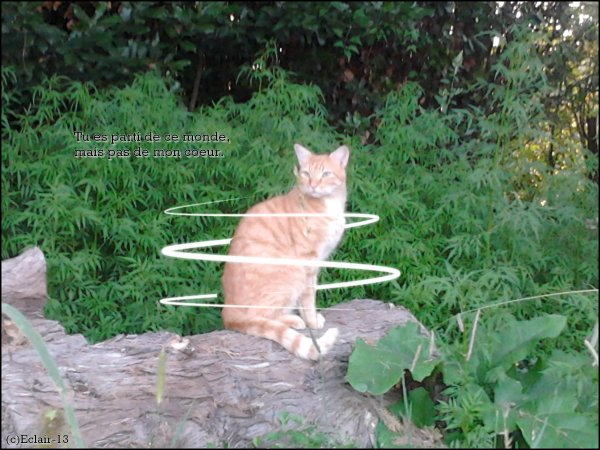 pour mon chat <3 :'(