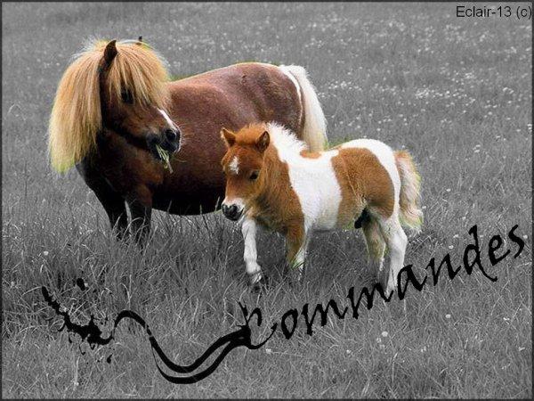 Commandes <3