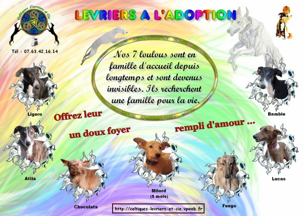 LEVRIERS A L'ADOPTION