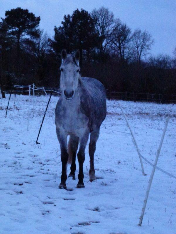Paloma dans la neige