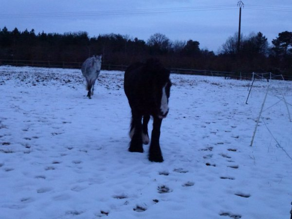 Willow et Paloma dans la neige