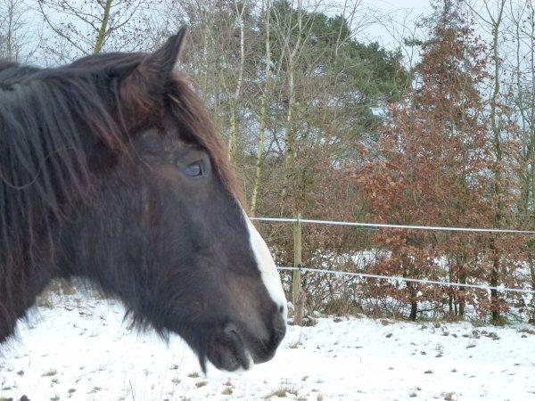 Willow dans la neige