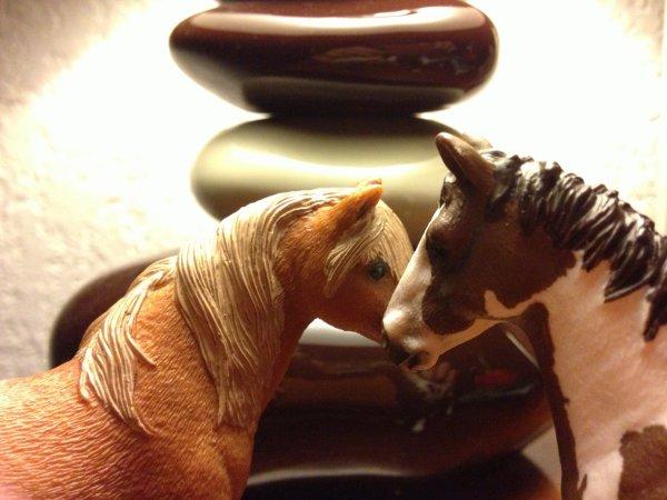 """pour le Photo Show de Loveirish """"un cheval et son copain"""""""