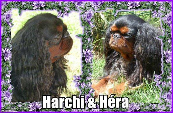 Harchi et Héra des Elfes Noirs de ty Galorel