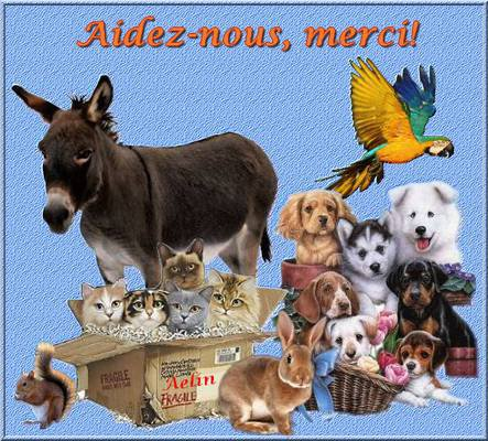 aider les animaux
