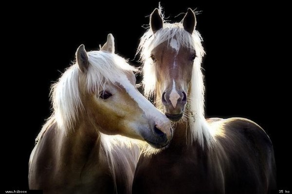 L'amitié entre les animaux